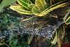 Raindrops (Arlete M) Tags: raindrops cobweb nature brasil brazil piquetesp