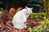 The white cat 🐈 (melyescamilla1) Tags: gato gatito cat kitten michi minino felinos beautiful cute cuteness beauty animal animals gatos cats