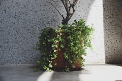 Tainan, Taiwan (anitalee955) Tags: tainan taiwan life light lightroom ordinary centralwestdistrict 台灣 台南 中西區 airbnb lightandshadow sunlight shadow plant