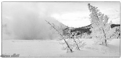 Which Way Does The Wind Blow (maureen.elliott) Tags: blakcandwhite 7dwf landscape winter trees frost steam mist mountains nature windy yellowstonenationalpark wyoming outdoors snow