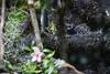 Blauer Pfeilgiftfrosch (Dendrobates tinctorius) (blumenbiene) Tags: boga botanical garden botanischer garten leipzig blauer baumsteiger pfeilgiftfrosch azurblauer dendrobates tinctorius frosch färberfrosch blue poison dart frog arrow okopipi