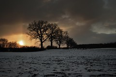 burn! (liebeslakritze) Tags: snow sunset afternoon contrasts kontraste schnee gegenlicht backlight