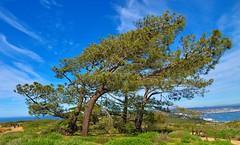 Torrey Pines -- Point Loma -- San Diego California (Joe Son Nguyen) Tags: torrey pines point loma san diego california nikon afs nikkor 24120mm f4 g ed