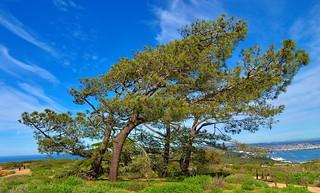 Torrey Pines -- Point Loma -- San Diego California