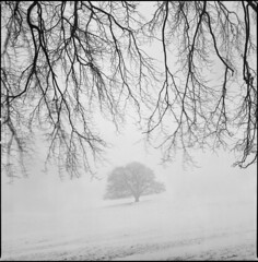 snow fog wind (steve-jack) Tags: hasselblad 501cm 80mm cb ilford delta 400 id11 film mf 6x6 hertfordshire epson v500 snow mist fog wind tree