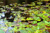 Floaters (Tony Worrall) Tags: capture outside outdoors caught photo shoot shot picture captured nature natural color cool nice colours colourful kept garden english northern pattern organicpattern macro texture outdoor wild geometric abstract symmetry minimalism diagonal surreal serene pads wet water pool lake plants leaf green float