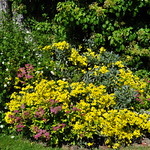 Dans les jardins, mixed-border, Traquair House (XVIIe), Innerleithen, Scottish Borders, Ecosse, Royaume-Uni. thumbnail
