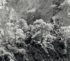 View from the trail, Troodos, Cyprus (ilya.petrow) Tags: bronicasqa fomabrom ilfordpanf october2017 cyprus 6x6 dektol print zenzanons200 pyrocathdc troodos landscape bwpwjanuary2018