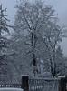 Zima w Baden ( okolice ) (koty3) Tags: zima spacer las snieg krajobraz