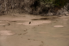 Plants right on the edge of the mud pool (Zack A.) Tags: waiotapu waikato newzealand nz