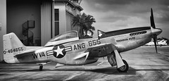 P-51 Mustnag: Touloose Nuts (Burnt Umber) Tags: wingsoffreedom p51 fighter rolls royce merlin supercharger trainer army air corp america american usa united states ww2 world war 2 machine gun relic rpilla001 pentax k5 digitalisthedevil pentax77mm ©allrightsreserved mustang touloosenuts