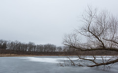 Cold & Drab (John Westrock) Tags: winter cold dull drab nature ice frozen lake wisconsin midwest canoneos5dmarkiii canonef2470mmf28lusm trees