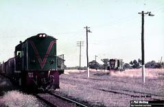 J555 RA1911 Y Pinjarra (RailWA) Tags: railwa joemoir philmelling westrai ra1911 y pinjarra