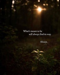What's meant to be  will always find its way.  Always. (tjetjev_gorbatjev@yahoo.co.id) Tags: motivational live fitnessmotivation poetry coffee thoughtoftheday quotes quotation life way love inspirational find enlightenment always hustle wisdom travel