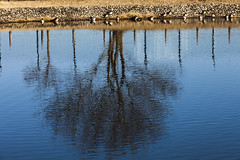 A SMALL AIRPORT, SOME PARKS AND CLOUDS - CXXXVIII (Jussi Salmiakkinen (JUNJI SUDA)) Tags: chofu tokyo japan cityscape park airport sky wood landscape tama 調布 飛行場 空港 林 森 空 武蔵野 多摩 東京 日本 風景 january clouds winter 2017 tammikuu reflection tree wave pond duck