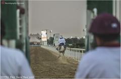 IMG_7064 copy (Services 33159455) Tags: qatar doha horse racing qrec emir horseracing raytohgraphy