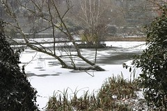 Frozen pond.... (markwilkins64) Tags: frozen winter freezing cold snow canon trees park london ice pond