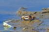 PA230464t_e (mrkevinw08) Tags: portugal algarve parquenaturaldariaformosa parque natural riaformosa