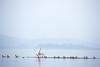 Turn Tern (prashantadkoli) Tags: partincole rivertern scape kali river natural wildlife backwaters nature canon5dmark3
