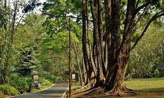 INDONESIEN, Im botanischen Garten von Bogor, 17057/9510