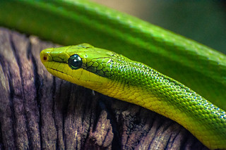 Slithering Green