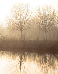 505201801aMILANO-187 (GIALLO1963) Tags: winter europe trees mist fog milano parconordmilano canonef70300mmf456lis nature italy lombardy canoneos5ds ngc