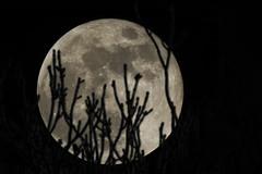 super moon january 2018 (planes, moon, nature) Tags: add tags away b camera exposure heaven far fernaufnahme high himmel kamera sky lens lense nature natur night nacht mond moon outdoor up z lunar macro p900 nikon coolpix waxing icreasing supermoon bluemoon