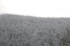 Horizonte blanco sinuoso (5diegoarias) Tags: nieve asturias