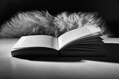 comfortable chair (kceuppens) Tags: book boek reading read lezen black white bw blackandwhite wit zwart nikon d810 nikond810 nikkor 24120 nikkor24120f4vr tafel table chair stoel flits flash explore inexplore