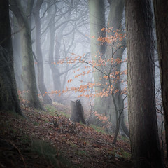 Misty Woodland (Mark Heslington Photography) Tags: mist fog woodland forest atmosphere scarborough uk united kingdom landscape olivers mount square