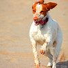 Bimba 2 (Tete07) Tags: gos perro dog platja playa playadecastelldefels domingodeperros perruno diumengedegosos platjadecastelldefels