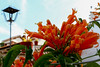 Paraíso Naranja (cloud721.jpg) Tags: taxco mexico nature rooftops clouds flowers rainy travel alarcon guerrero study abroad unam cepe colonial town silver city mining brick white houses rustic gardens balcony terrace lamp red orange pots ceramic