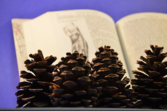 Pine Cones and an Anatomy Book (Kajal P) Tags: cones pine brown nature book anatomy physiology text written typed pages pinecones texture rough