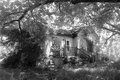 Long Forgotten In Black and White (moodyfan (Julie) Working on catching up) Tags: abandoned blackandwhite trees house ruined forgotten