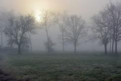 (Bernard P.) Tags: brume brouillard fog mist arbres herbe lumière nikon