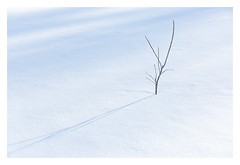 Courage (bprice0715) Tags: canon canoneos5dmarkiii canon5dmarkiii nature naturephotography winter snow shadows simple minimal minimalism outdoors beautiful beauty delicate beautyinnature