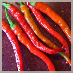 Chilli Peppers (ClydeHouse) Tags: garden instagram produce crop byandrew peppers chilli greenhouse harvest