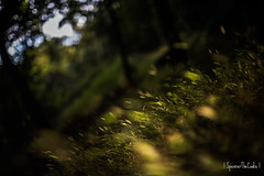 A Field Of... (SpencerTheCookePhotography) Tags: grass plant green dof depthoffield canon bokeh