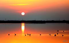 ___ la pace del tramonto ___ (erman_53fotoclik) Tags: sera sunset tramonto riflesso silhouettes sole imbrunire profili scuri stella atmosfera calda acqua uccelli fenicotteri crepuscolo cielo luce rosso canon eos 500d erman53fotoclik