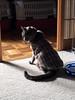 Wondering Why Dinner is so Far Away (sjrankin) Tags: 22january2018 edited animal cat argent floor upstairs shadow waterbowl carpet heater yubari hokkaido japan