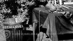 DSC07686 (O KDUKO) Tags: araraquara blackandwhite blackandwhitephotography pictureoftheday blackandwhitephoto photography bnwcaptures monochrome monochromatic instablackandwhite monoart instabw bw bwstylesgf artgallery visualart bwphotooftheday photoshoot bwstyleoftheday aesthetics streetphotography arts feira artesanato