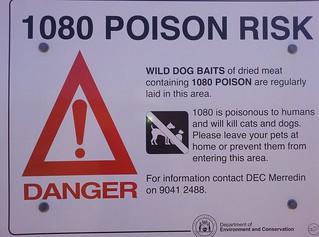 Poison baits