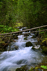 Day 33 - The Creek (ElginCon) Tags: ifttt 500px water nature river travel italy summer view colors waterfall woods earth world colours creek exploring natura estate explore acqua colori torrente worldwide bosco intothewild earthporn naturelover trentinoaltoadige valdifassa explorable valmonzoni