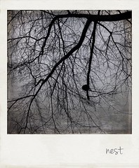 nest (jeanne.marie.) Tags: patternsinnature branches iphoneography iphone7plus textured winter silhouettes tree nest 100xthe2018edition 100x2018 image23100