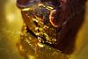 c h o c o l a t e c a k e (CiaoMayonga) Tags: mayonga chocolatecake cake chocolate gold goldbackground foodporn delicious melting