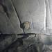 Chert nodule in limestone (Great Relief Hall, Mammoth Cave, Kentucky, USA) 4