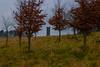 Small Castle (A Costigan) Tags: castle cartonhouse kildare outdoor trees ireland irish canon canon80d