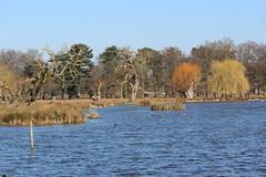 Bushey Park (ec1jack) Tags: busheypark park lake pond water nature bushey kingston london england britain uk europe winter cold kierankelly canoneos600d ec1jack