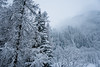 Snowstorm (Marco MCMLXXVI) Tags: alagna valsesia italy alps alpi mountain forest winter snow snowstorm storm weather landscape scenery nature outdoor inverno neve foresta sony nex5 rawtherapee