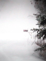 Mailbox In A Snow Storm (LupaImages) Tags: winter road trees pines mailbox january cold snow storm outdoors outside blowing windy morning